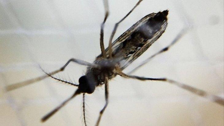 orig-1516632089_komar_virus-zika_0_8cc820cc608a7920b2df8fc65b36dc4a